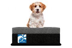 Colchão Box Probel Pet Plus p/ Cães e Gatos - Colchão Probel